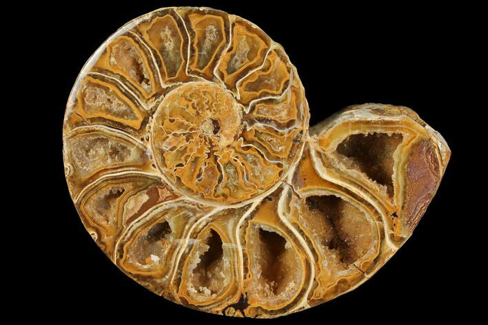 "3.6"" Sliced, Agatized Ammonite Fossil (half) - Jurassic"
